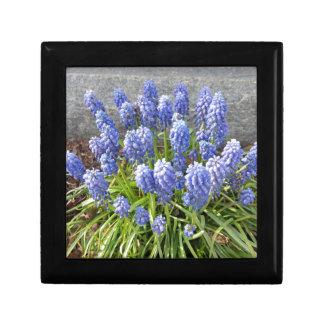 Grape Hyacinth Gift Boxes