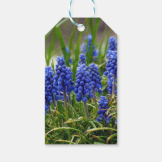 Grape Hyacinth Gift Tags