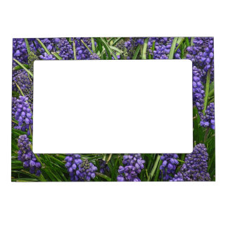 GRAPE HYACINTH MAGNETIC PICTURE FRAME