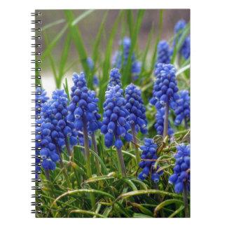 Grape Hyacinth Notebooks