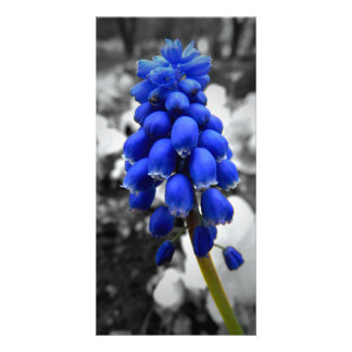 Grape Hyacinth Photo Card