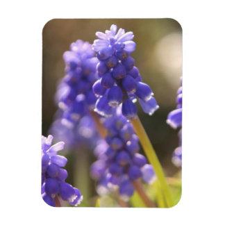 Grape Hyacinth Premium Magnet Magnet