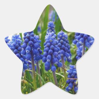 Grape Hyacinth Star Sticker