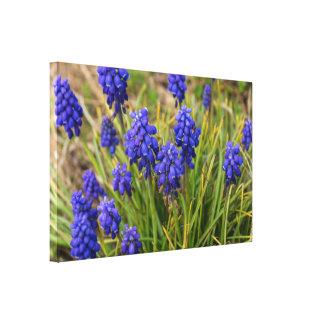 Grape Hyacinths Family Canvas Print
