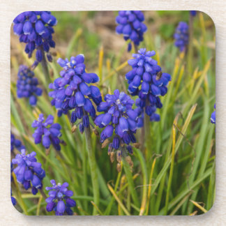Grape Hyacinths Family Coaster