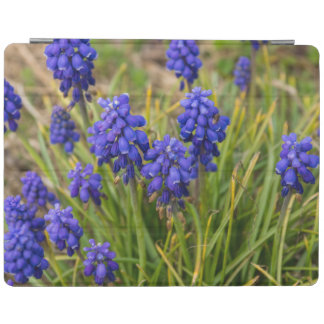 Grape Hyacinths Family iPad Cover