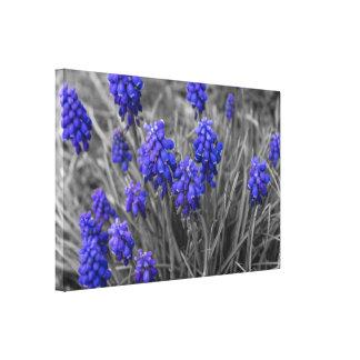 Grape Hyacinths Family Select Canvas Print