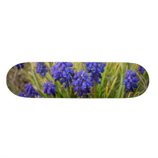 Grape Hyacinths Family Skateboard