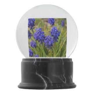 Grape Hyacinths Family Snow Globe