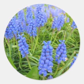 Grape Hyacinths Sticker