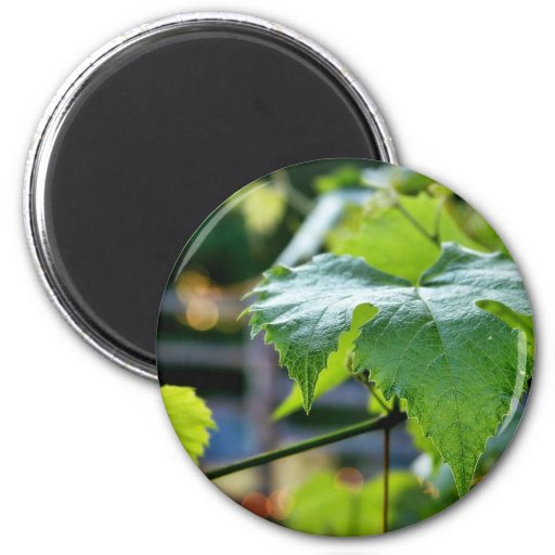 Grape Leaf Leaves Green Magnet