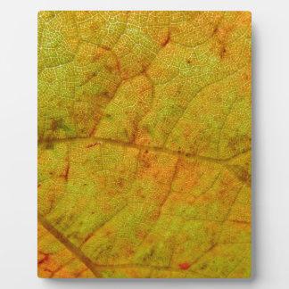 Grape Leaf Underside Plaque