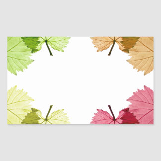 grape leaves in front of white background sticker