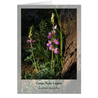 Grape Soda Lupine - Native Notecard