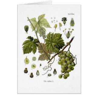Grape vine card