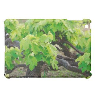 Grape vines iPad mini case