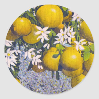 Grapefruit & Blossoms in Florida Classic Round Sticker