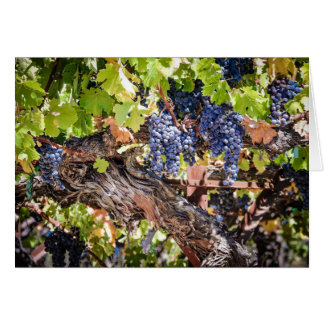 Grapes and Vines - Blank Greeting Card