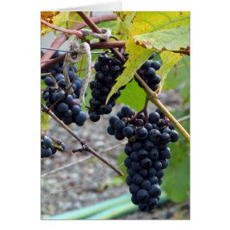Grapes at a winery card