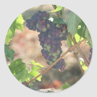 Grapes Classic Round Sticker