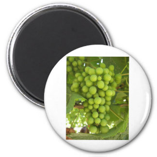 Grapes Fridge Magnets