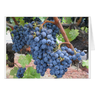 Grapes of Napa Valley Card