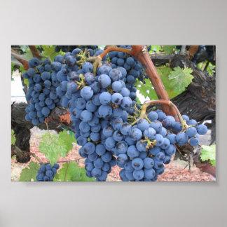 Grapes of Napa Valley Poster