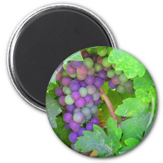Grapes on the Vine 2 Inch Round Magnet