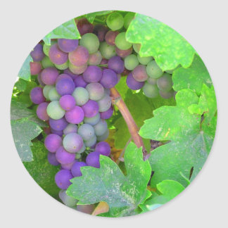 Grapes on the Vine Classic Round Sticker