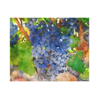 Grapes on the Vine in Napa Valley California Canvas Print