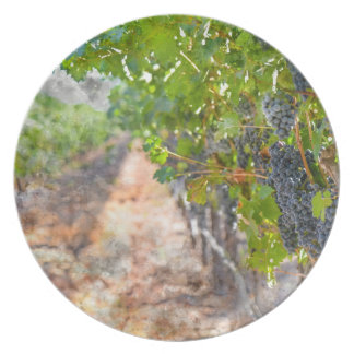 Grapes on the Vine in Napa Valley California Plates