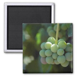 Grapes on the Vine Fridge Magnets