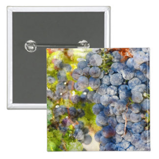 Grapes on the Vine ready to make Wine 2 Inch Square Button