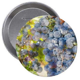 Grapes on the Vine ready to make Wine 4 Inch Round Button