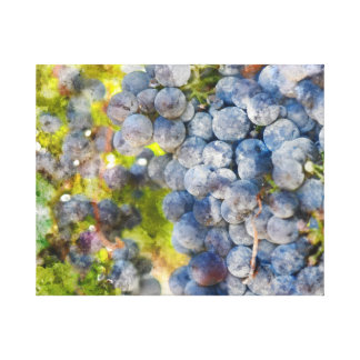 Grapes on the Vine ready to make Wine Canvas Print
