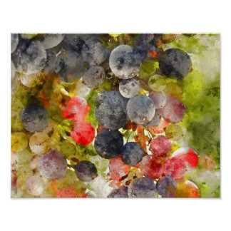 Grapes on the Vine ready to make Wine Poster