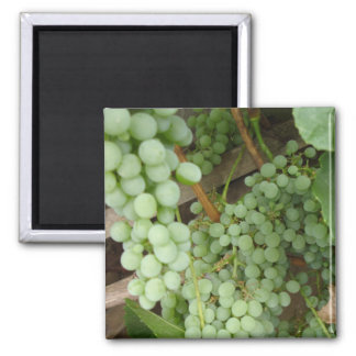 Grapes on the Vine Square Magnet
