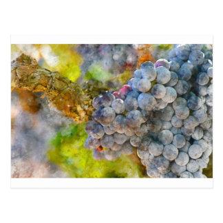 Grapes on Vine Postcard