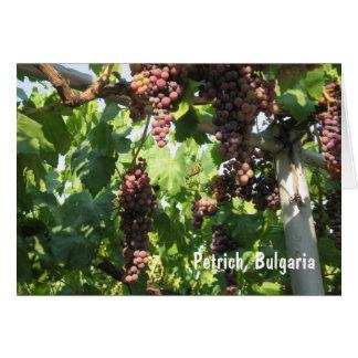Grapes Petrich, Bulgaria Card