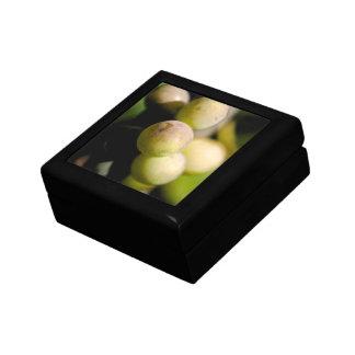 Grapes Trinket Box
