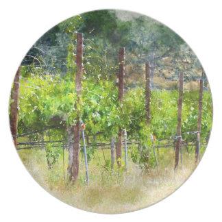 Grapes Vines in Spring in Napa Valley California Plate