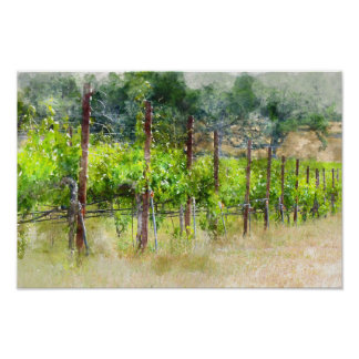 Grapes Vines in Spring in Napa Valley California Poster