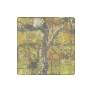 Grapes Vines in Spring in Napa Valley California Stone Magnets