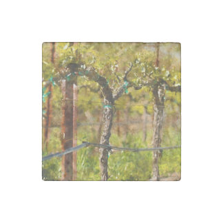 Grapes Vines in Spring Stone Magnets