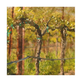 Grapes Vines in Spring Wood Canvases