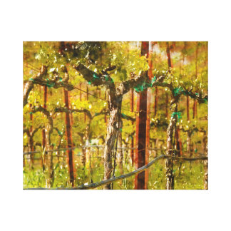 Grapes Vines in Vineyard during Spring Canvas Print