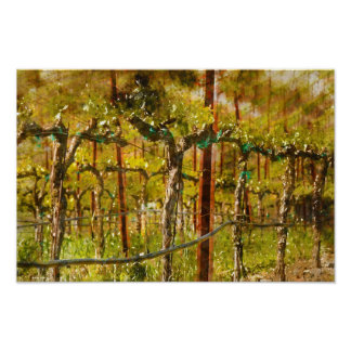 Grapes Vines in Vineyard during Spring Poster