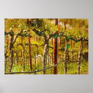 Grapes Vines in Vineyard during Spring Poster