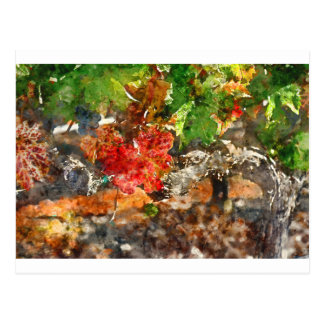 Grapevine in the Autumn Season Postcard