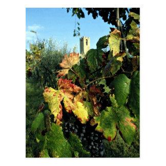Grapevine, Tuscany, Italy Postcard